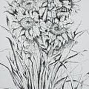 Sunflowers Black And White Poster