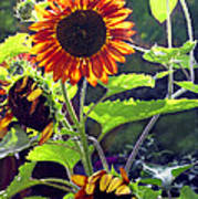 Sunflowers In The Park Poster