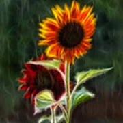 Sunflowers In The Rain Poster
