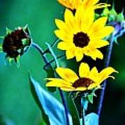 Sunflowers Portrait Poster