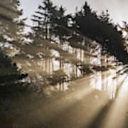 Sunlight Breaks Through The Fog Poster