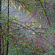 Sunlight Highlights In Armstrong Redwoods State Preserve Near Guerneville-ca Poster