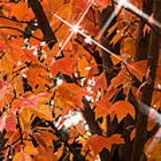 Sunlight Through The Leaves Poster