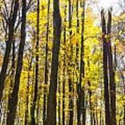 Sunburst Through Trees Poster