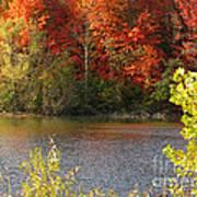 Sunlit Autumn Poster