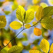Sunlit Autumn Leaves Poster by Natalie Kinnear