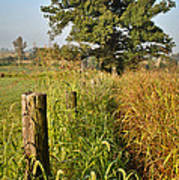 Sunlit Fence Posts In Weeds Poster