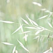 Sunlit Grass Poster