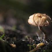 Sunlit Mushroom Poster