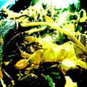 Sunlit Seaweed Poster