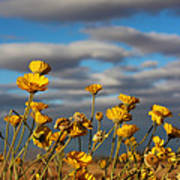Sunlit Yellow Wildflowers Poster