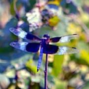 Sunning Dragonfly Poster