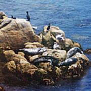 Sunning Seals Poster