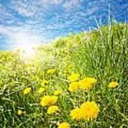 Sunny Dandelions Poster