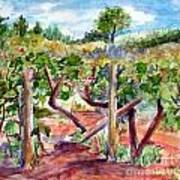 Sunny Grape Fields of Medjugorie Poster