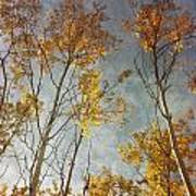 Sunny Leaves Tall Poster