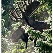 Sunny Moose Poster