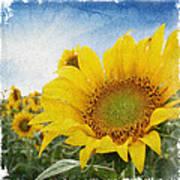Sunny Morning Poster