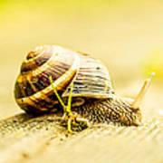 Sunny Snail Poster