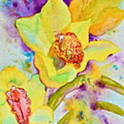 Sunny Splash Of Orchids Poster