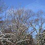Sunny Winter Sky Poster