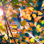 Sunny Yellow Leaves Poster