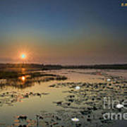 Sunrise And Water Lilies Poster