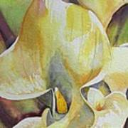 Sunrise Callas Poster