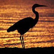 Sunrise Heron Poster