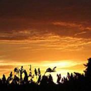 Sunrise Over The Milo Field Poster