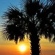 Sunrise  Palm Tree Poster