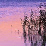 Sunrise Reeds Poster