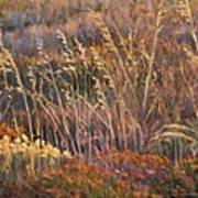 Sunrise Reflections On Dried Grass Poster