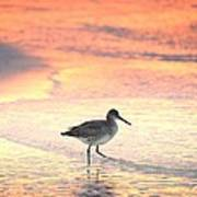 Sunrise Shorebird Poster