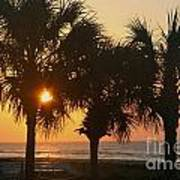 Sunrise Through The Palms Poster