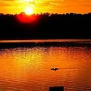 Sunset And Ducks Poster by Will Boutin Photos
