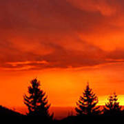 Sunset And Fir Trees Poster