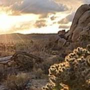 Sunset At Joshua Tree National Park Poster