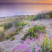 Sunset At The Beach  Flowers On The Sand Poster