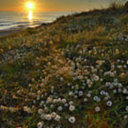Sunset At The Beach  White Flowers On The Sand Poster by Guido Montanes Castillo