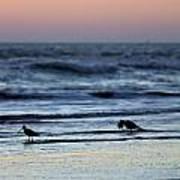 Sunset Birds Poster