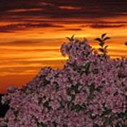 Sunset Blooms Poster