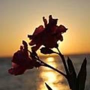 Sunset Flower 2 Poster