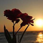 Sunset Flowers Poster
