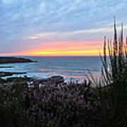Sunset Garden View Poster