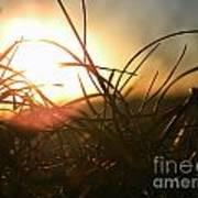 Sunset Grass 1 Poster