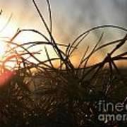 Sunset Grass 2 Poster