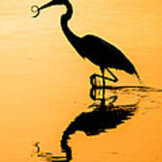 Sunset. Great Blue Heron. Poster