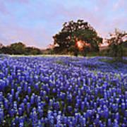 Sunset In Bluebonnet Field Poster
