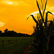 Sunset In The Cornfield Poster